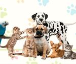 imagenes de Animales y Mascotas Cusco