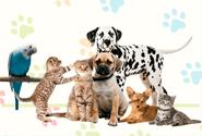 Anuncios clasificados de Animales y Mascotas en Perú